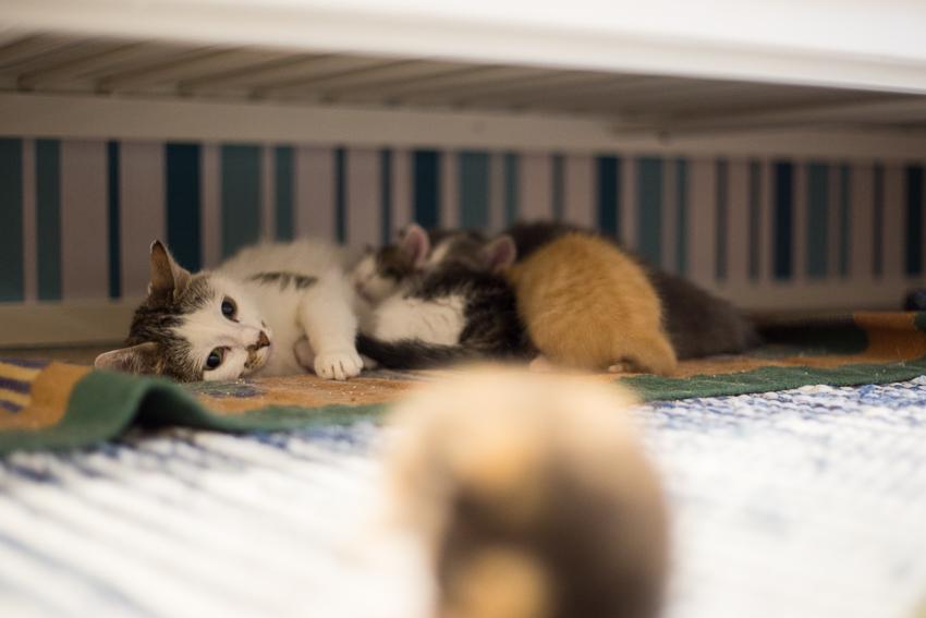 Vieläkö on kissanpentuja?