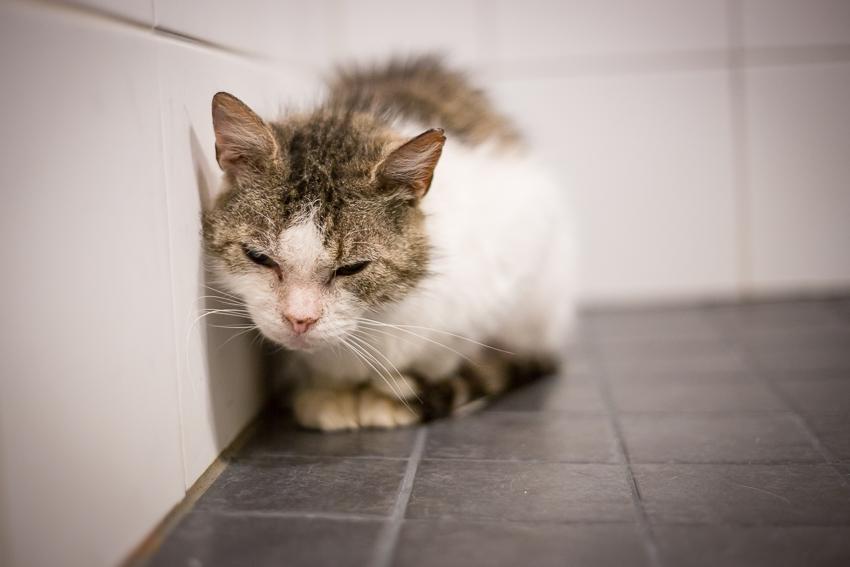 Kun kissalla allergia puhkeaa – ruoka-aineallergioista