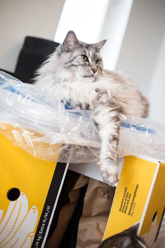Kissoja ja laatikoita